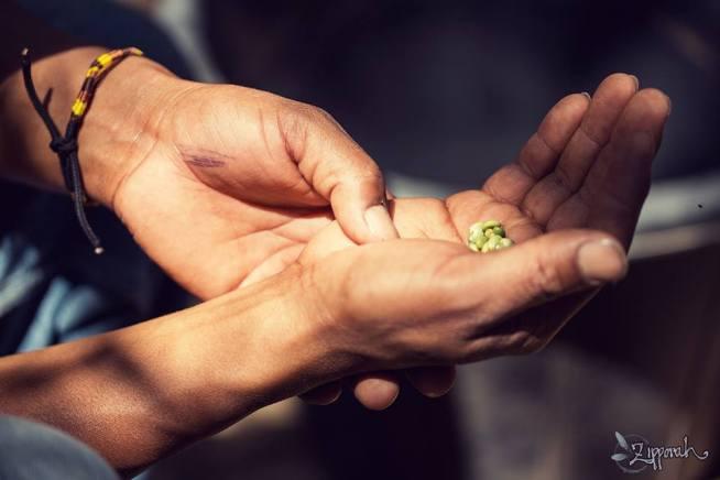hands semillas