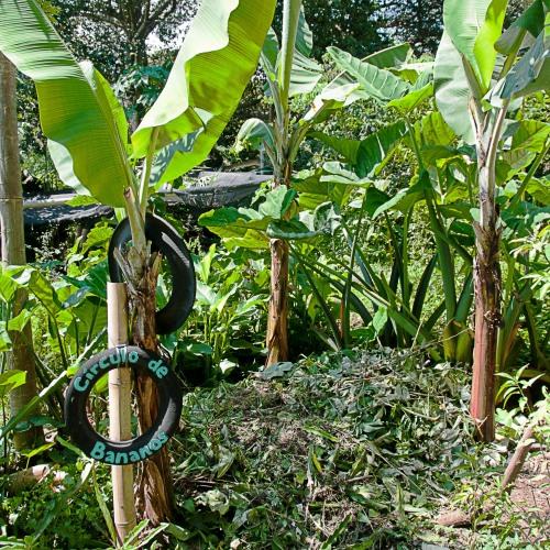 aguas-grises-circulo-bananos-imap