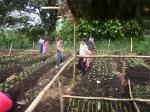 actividades- imap-huerto-totolya-8